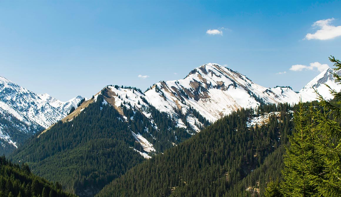 Mountains Ecology