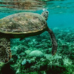 We Want to Save the Ocean Turtles