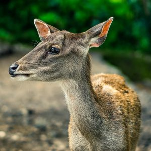Volunteer Program: Let's Protect Baby Deer